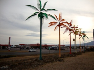 A tacky touch of the tropics near one of many Montana casinos.
